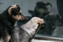 """Sve veći broj manipulacija o ujedima napuštenih pasa sa ciljem prikrivanja organizovanog kriminal koji se odvija u sklopu """"higijenskog servisa"""" J.P. Lokom d. o. o."""