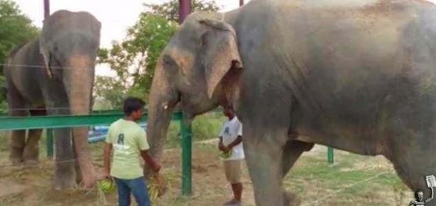 Slon koji je rasplakao svijet stekao prvu prijateljicu