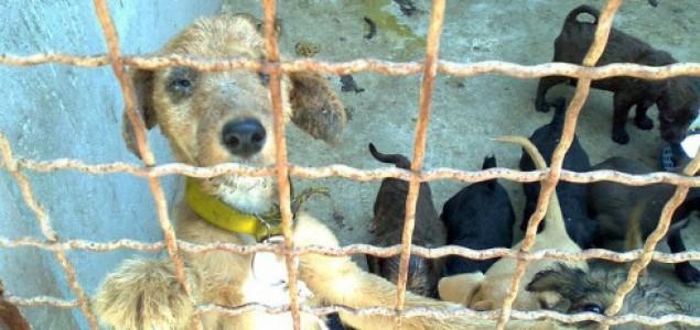 Da li treba zatvoriti prihvatilište za napuštene životinje u Pančevu?