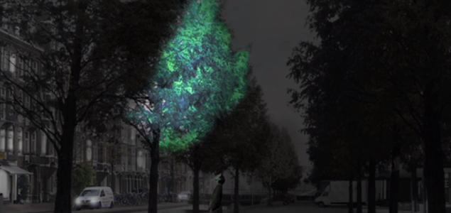 Bioluminiscentno drveće jednog bi dana moglo osvjetljavati ulice