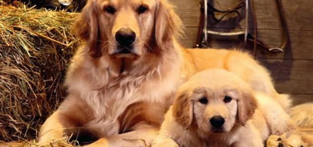 Studija: Psi mogu biti ljubomorni kao i ljudi