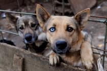 Skloništa za napuštene životinje puna, a zakon koji ih štiti se ne provodi