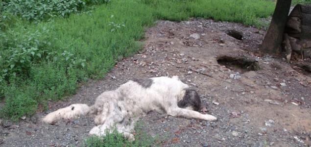Očajno stanje u državnom prihvatilištu za pse u Doboju