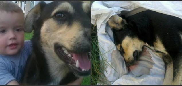 Nastavljeni zločini nad životinjama: Upucan još jedan napušteni pas