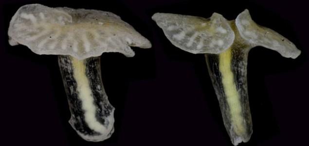 Misteriozna bića s dna mora ne spadaju niti u jednu biološku klasifikaciju