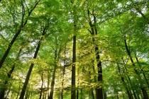 UN: Do 2030. treba zaustaviti nestajanje tropskih šuma