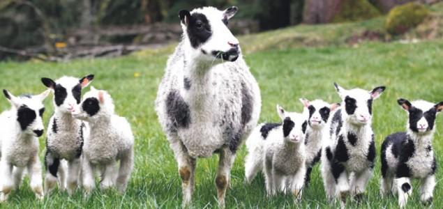 Vakcina nema, opasno i za životinje i za ljude