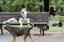 Šta radi veterinarska inspekcija kad zaprimi prijavu?