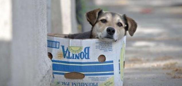 DOGS TRUST UČESTVUJE U UDARU NA USTAVNI POREDAK BIH, KAO I ORGANIZOVANOM KRIMINALU