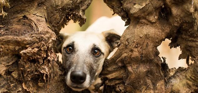 Ozren Kebo: Pobićete pse, šta ćete sa džukelama?