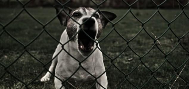 10 najčešćih uzroka agresije kod pasa