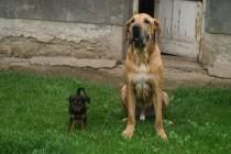 Jumbo – Priča o nesretnom psu i dobrim ljudima