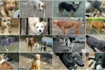 Svi psi sa ovih fotografija biće eutanazirani za samo 5 dana!