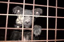 Doboj: Priča o psima koji su sinoć plakali