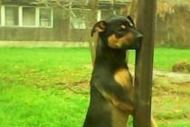 Strašno: Obješen napušteni pas