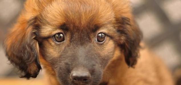 Udruga Stop specizmu poziva vas da udomite životinju