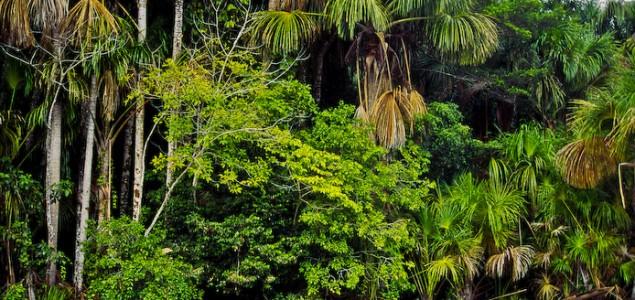 Peruanske šume skladište više CO2 nego što SAD emituju