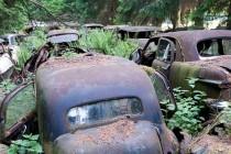 Šuma prepuna starih automobila, Belgija