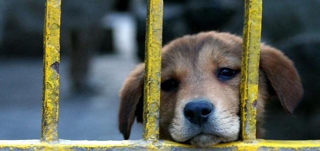 Pančevo: Montažne kućice za napuštene kuce i mace