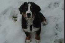 Koliko hladno je psima prehladno?