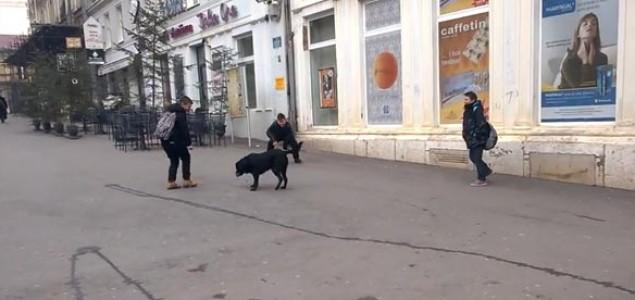 Nisu svi napušteni psi opasni