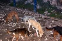 Prihvatilišta za pse u Trebinju i Foči: psi izgladnijeli i prepušteni sami sebi