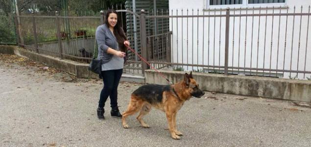 Udomljavanje pasa lutalica u Mostaru