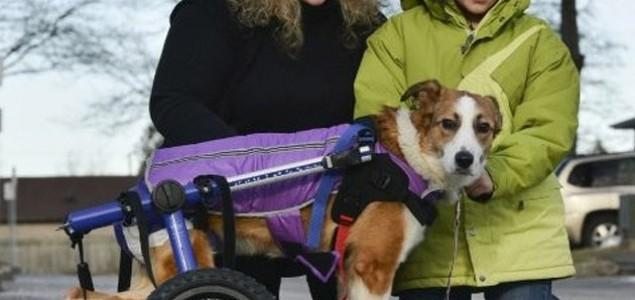 Paralizirani pas iz BiH koji je ostavljen da umre sretni dom našao u Kanadi