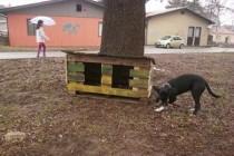 ZAJEČAR: Postavljene prve kućice za napuštene pse i mačke!