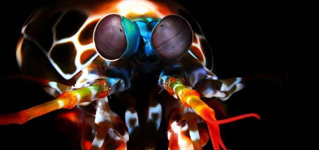 5 Čudnovatih životinja za koje (možda) niste ni znali da postoje