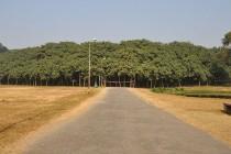 Veliki Banjan: Drvo koje izgleda kao cijela šuma (najšire drvo na svijetu)