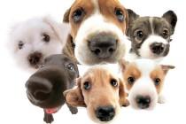 Što se događa kada vaš ljubimac čuje lavež drugog psa?