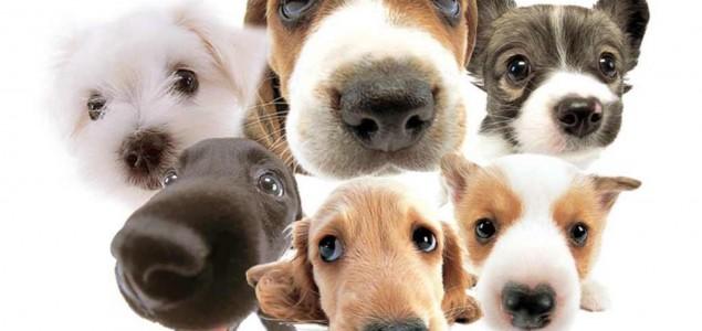 Pet stvari koje morate znati i napraviti ako pas ima suhu njušku