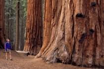 Nacionalni park Sequoia: Zemlja divovskih stabala, SAD