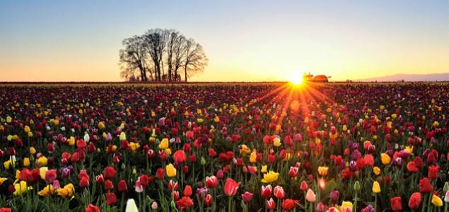 Halil Džananović: Pozdrav proljeću