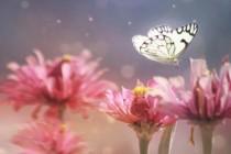 Čarobni svijet insekata, prekrasne makro fotografije by Lee Peiling