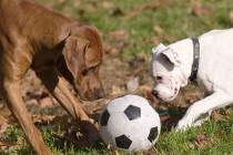 Englesko istraživanje otkrilo kako pubertet utječe na pse