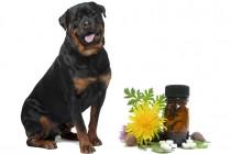 Alternativna i vrhunska medicina