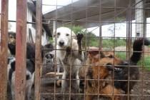 Sklonište za napuštene i izgubljene pse Gladno Polje – Sarajevo