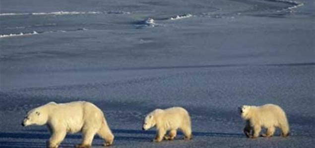 Sjevernih medvjeda bit će sve manje zbog zatopljenja