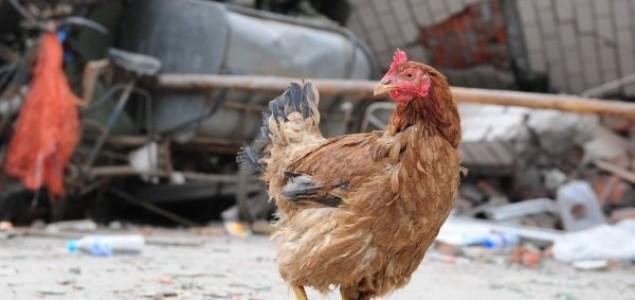 Kina: Životinje predviđaju zemljotrese?