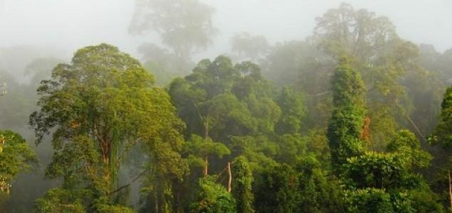Tropske šume veličine Indije nestat će do 2050.
