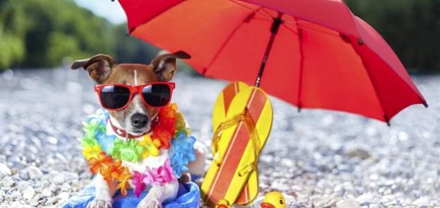 Kako s psom iskoristiti zadnje dane ljeta?