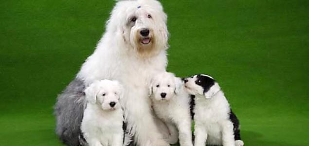Dobrobit životinja u modernom uzgoju pasa