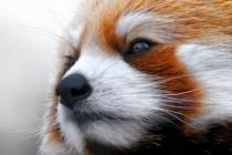 50 Zanimljivih činjenica o životinjama