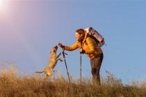 Evo zašto je odlično voditi pse na kampiranje