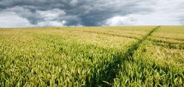 Dvije trećine zemalja EU-a izjasnilo se protiv GMO-a