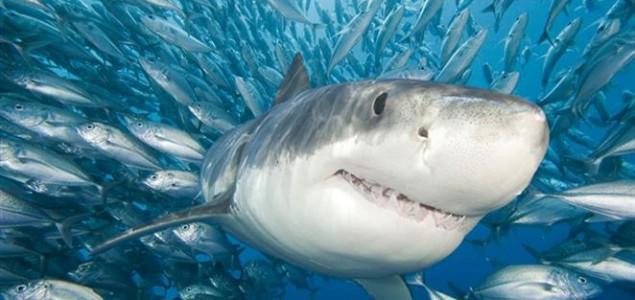 Australija dronovima i sonarima na morske pse