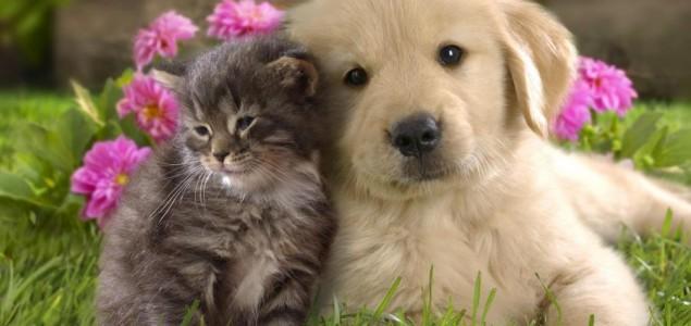 Mislite li da znate sve o psima i mačkama?