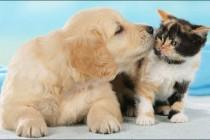 Pas i mačka zajedno!